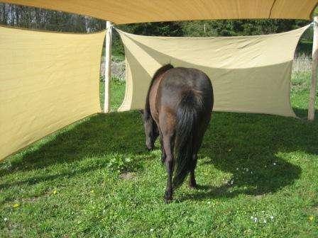 Læskur hvor hesten kan søge tilflugt er flytbart